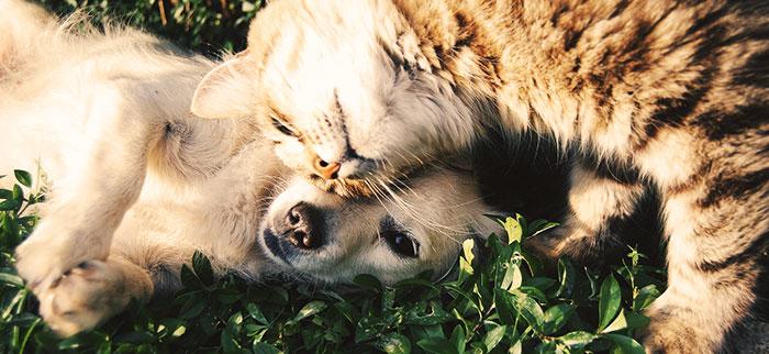 peliculas-perro-gato