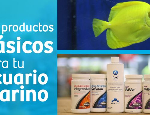 5 productos básicos para tu acuario marino