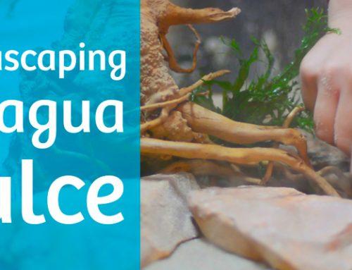 Montaje de acuarios de agua dulce con aquascaping