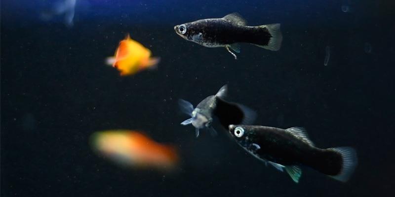 peces tropical principiantes