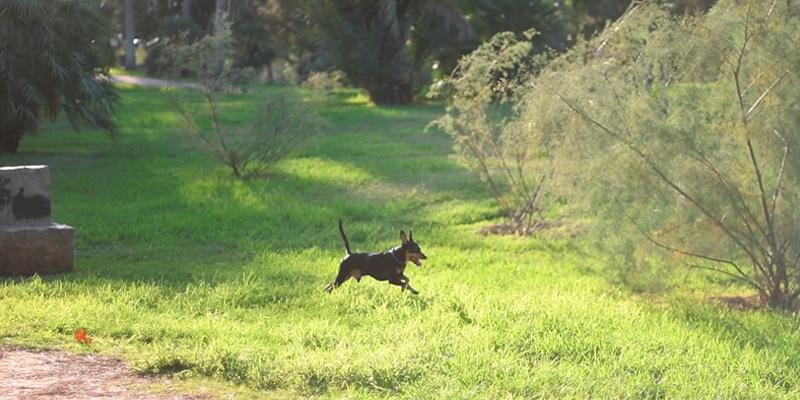 perro-practica-llamada