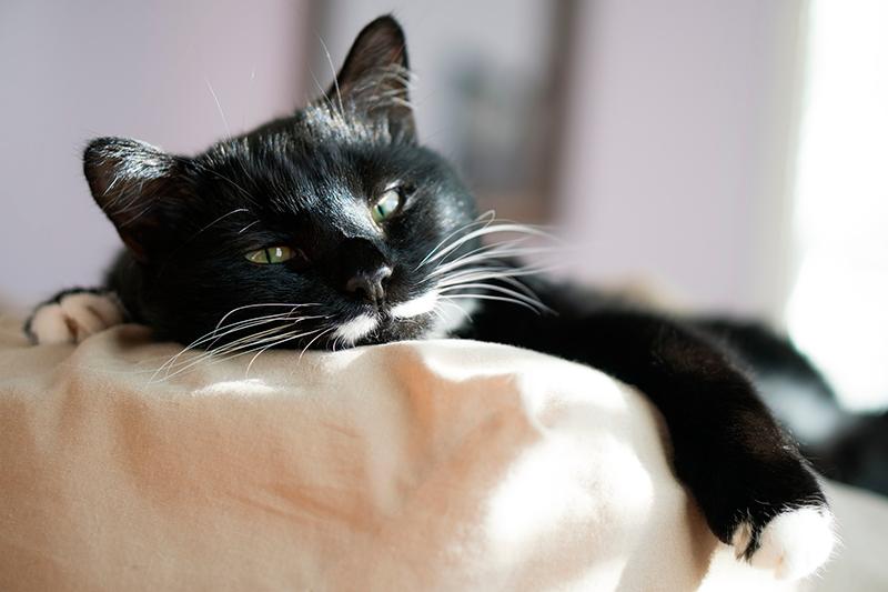 dormir con mi gato en la cama