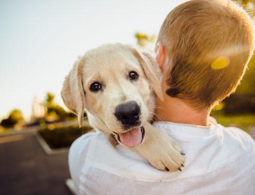 Identifica a tu perro · La importancia del microchip