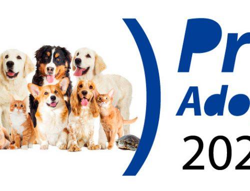 Colaboramos en el evento Pro Adopt 2020