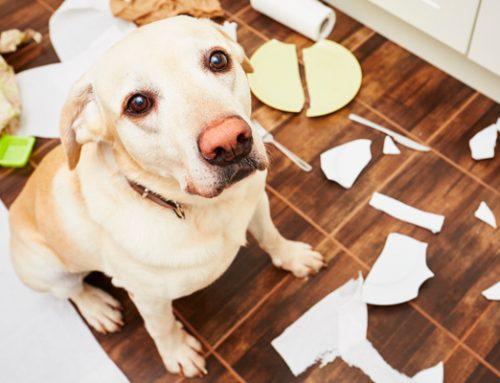 Estrés canino · Alternativas al comedero para perros con ansiedad