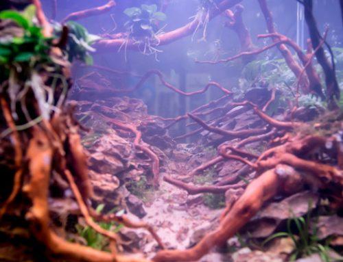 Taller gratuito: Acuariofilia y paisaje con Alejandro Ríos