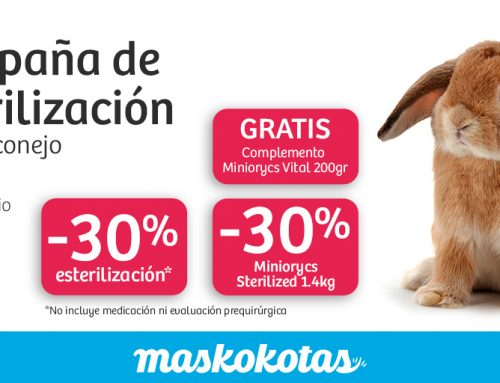 Campaña de esterilización para tu conejo
