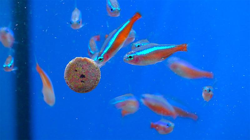 pastillas-fondo-peces