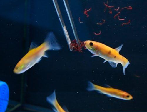 Comida para peces · 7 tipos de alimento y sus ventajas