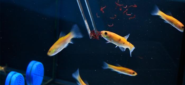 comida peces acuario