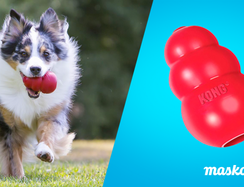 Kong: el juguete rellenable para perros