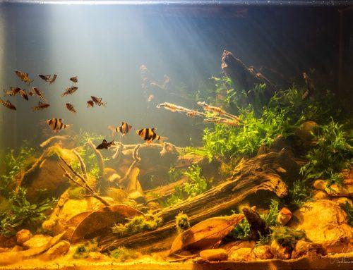 Evento online 'Wild Orinoco' – Las peculiaridades e importancia del biotopo