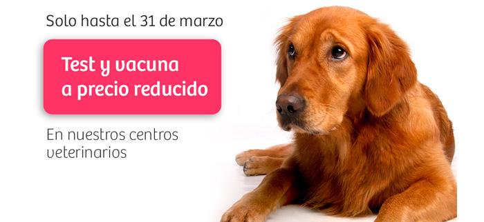 oferta vacunación leishmania maskokotas veterinario