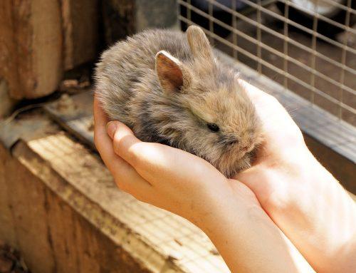 La mixomatosis en conejos · ¿Qué es y cómo prevenirla?