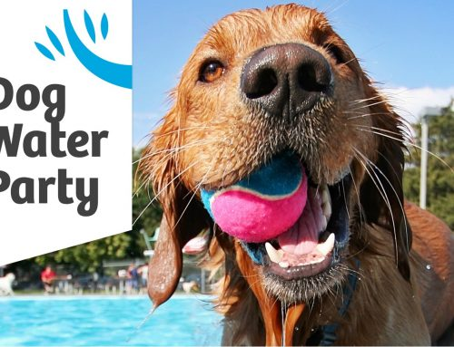 Dog Water Party