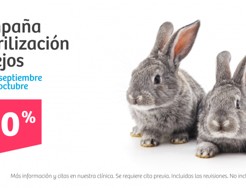 Campaña veterinaria · Esteriliza a tu conejo